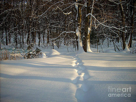 Snow Path by Randi Shenkman