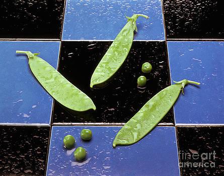 Craig Lovell - Snow Peas