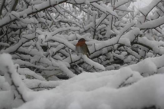 Snow robin thicket by Jenny A Jones