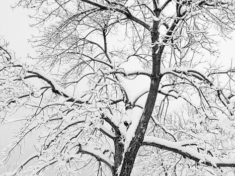 Robert VanDerWal - Snow Storm Tree