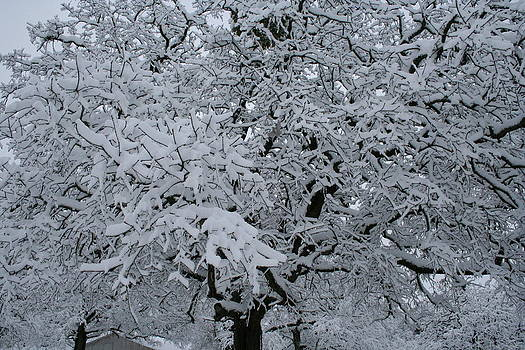 Snow Tree by Lisa Browning