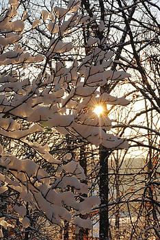 Snowburst by Amanda Lomonaco