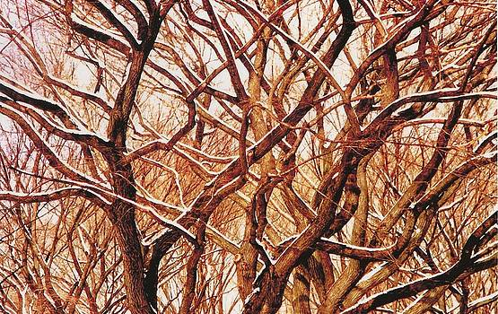 Snowed Branches by Archie Reyes