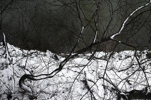 Snowed Down by Daniel Rogers