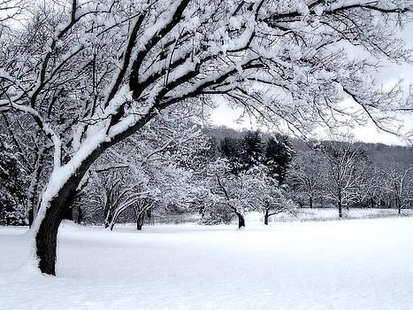 Snowfall by Bruce Rolff