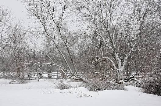 Valerie Kirkwood - Snowfall