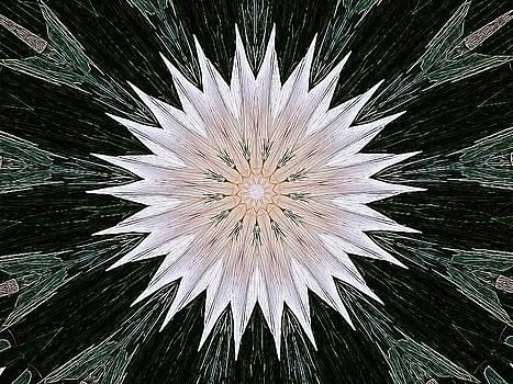 Nick Heap - Snowflake Lily