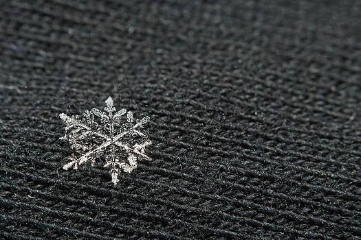 Snowflake on Black by Jaci Harmsen