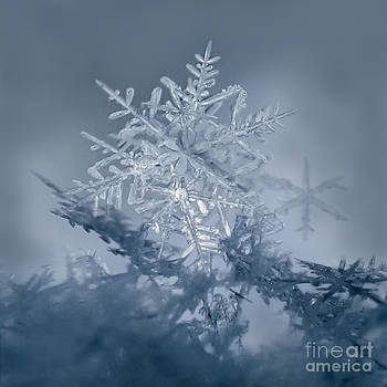 Snowflakes Gather Here by Beth Riser