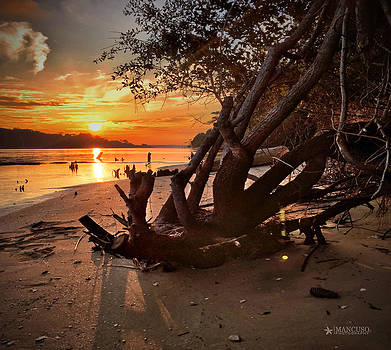 Snow's Cut Driftwood Sunset by Phil Mancuso