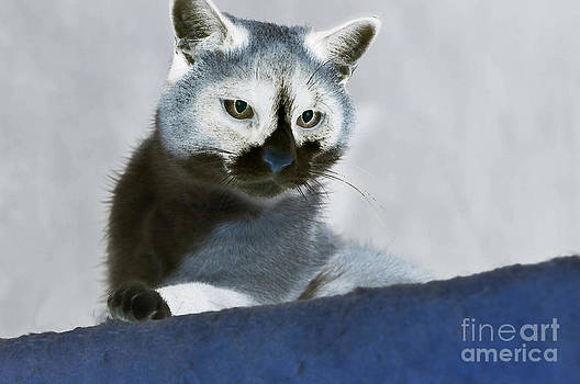 Snowshoe in Blue by Sherin  Hylan