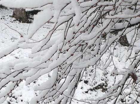Snowy Branches by Donna Dixon