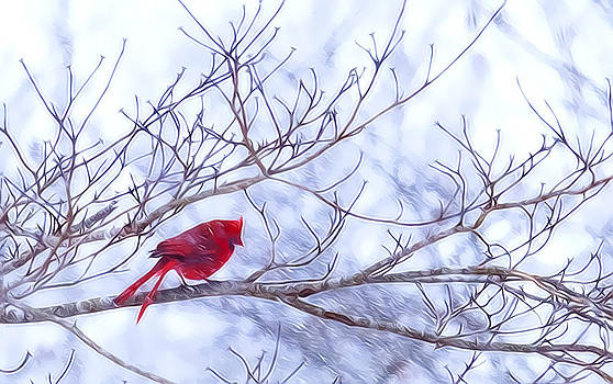 Snowy Cardinal by Laura Greene