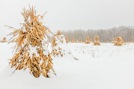 Chris Bordeleau - Snowy Corn Shocks