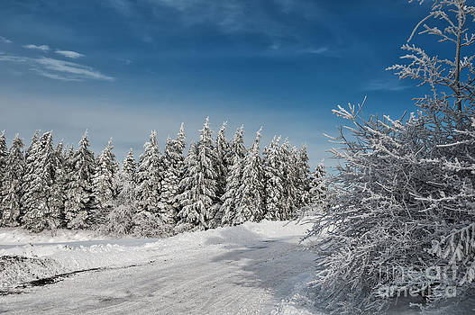Lois Bryan - Snowy Country Lane