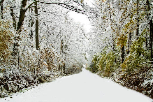 Snowy Day In October by David Simons