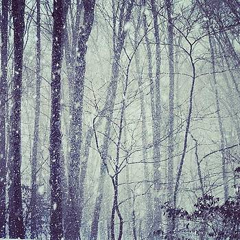 Snowy Day #njsnow  #new_jersey by Teresa Delcorso