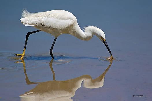Snowy Egret Catching a Crawdad by Stephen  Johnson