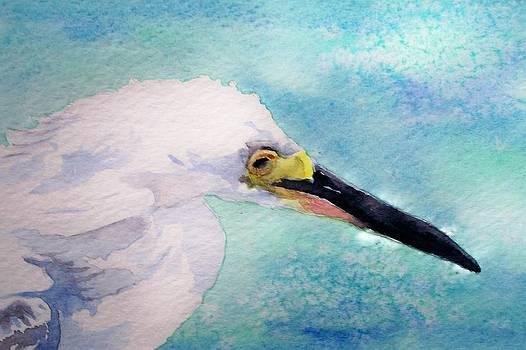 Snowy Egret by Celene Terry