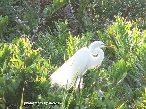 Snowy Egret by Debi K Baughman