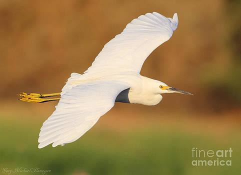 Snowy Egret by Gary Michael Flanagan