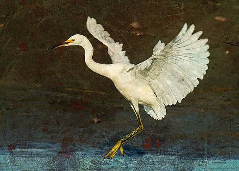 Snowy Egret Landing in the Marsh by Cheryl Ann Quigley