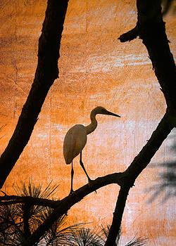 John Cardamone - Snowy Egret Sunset 2