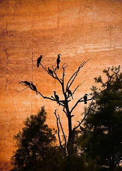 John Cardamone - Snowy Egret Sunset