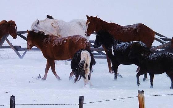 Snowy Hooves by Misty Ann Brewer