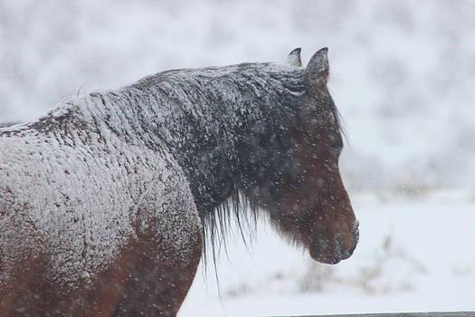 Snowy Horse by Kim Baker