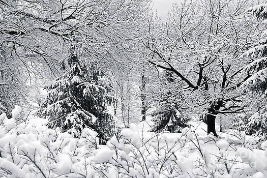 Snowy by Jay Nodianos