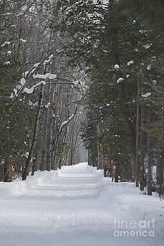 Snowy Lane by Joseph Yarbrough