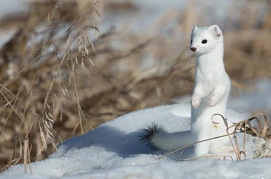 Kevin  Dietrich - Snowy Lookout