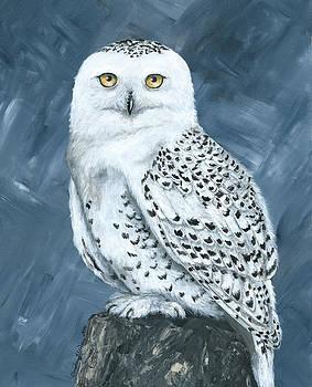 Snowy Owl  by Christine StPierre