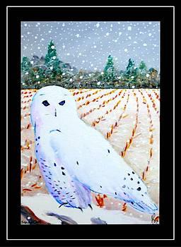 Jim Harris - Snowy Owl