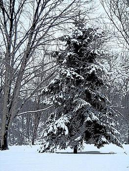 Snowy Pine Scene by John Arthur Robinson