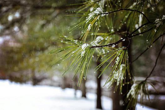 Snowy pine by Kelley Nelson