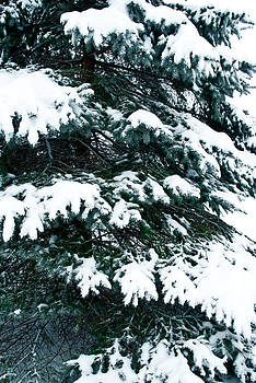 Snowy Pine by Nickaleen Neff