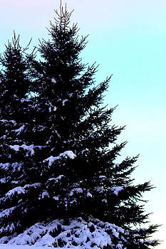 Snowy Pines by Sherry Hudson