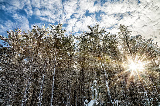 Snowy Pines with Sunflair by Brian Boudreau