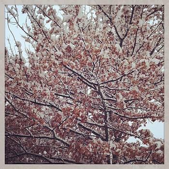 Snowy Tree II by Heather Levesque