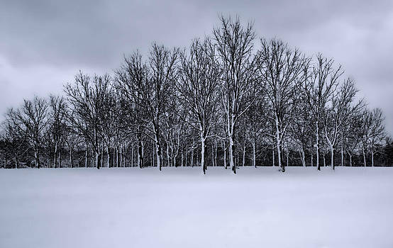 Snowy tree line by Clay Swatzell