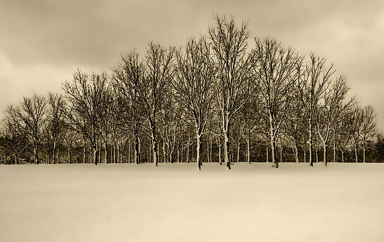 Snowy Tree Line - sepia tint by Clay Swatzell