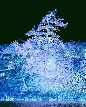 Snowy Tree by Mickey Harkins