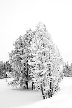 Winter Landscape- Snowy Trees by Feryal Faye Berber