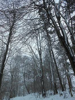 Snowy trees by Tanya Carter