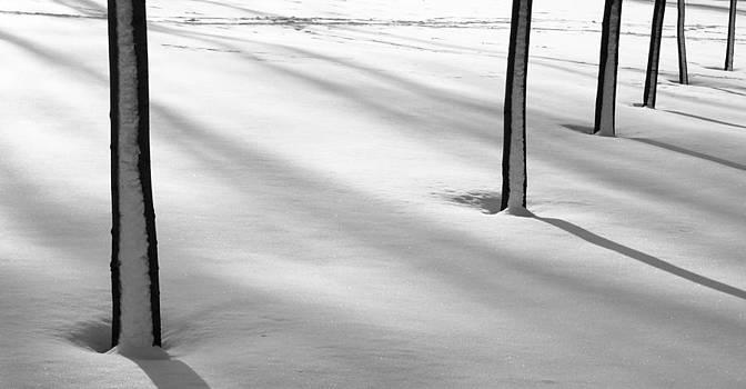 Arkady Kunysz - Snowy trunks