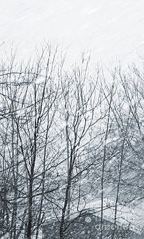 Sandra Cunningham - Snowy winter storm blowing through the trees