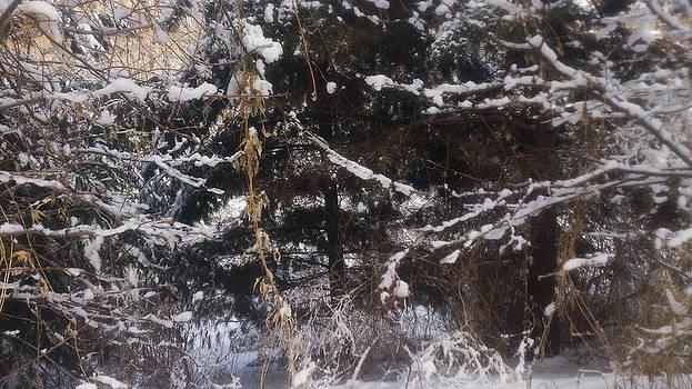 Snowy Wooded Treest by Zeni Shariff