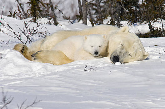 Snuggle time by Richard Berry